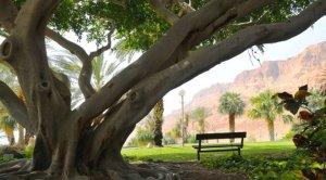 Ein Gedi Kubbutz3