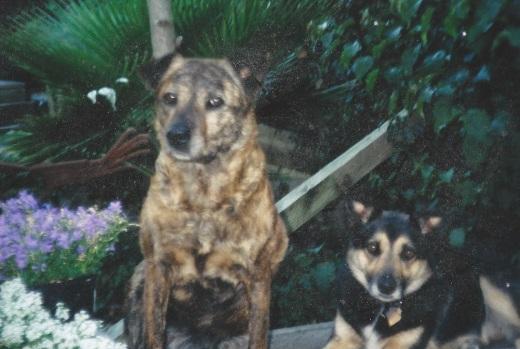 Gamba & Coquille Fall 2009