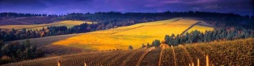 Overview of vinyards
